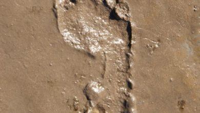 Photo of Sæt dit fodspor i livet