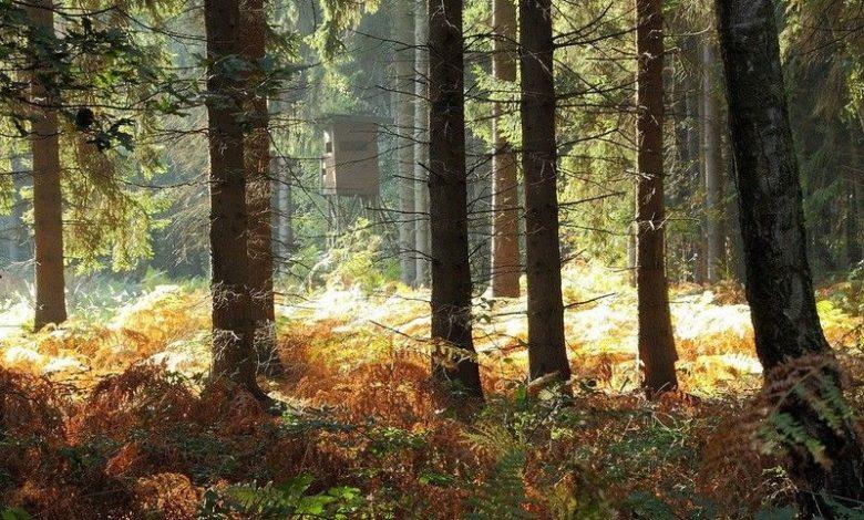 Photo of Find et udvalg af jagtrejser her online